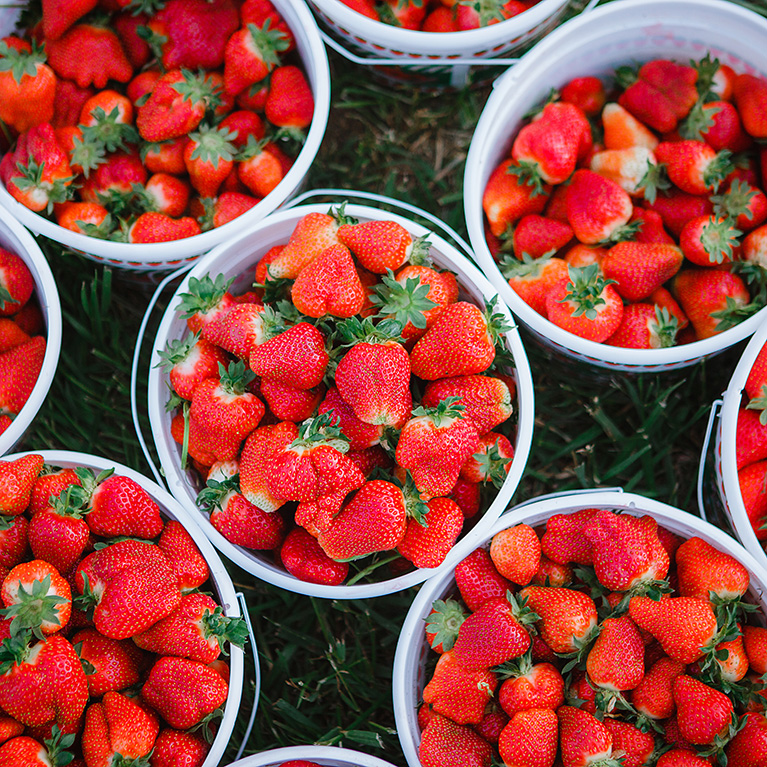 We have pre-picked strawberries available for purchase at each of our 3 locations!