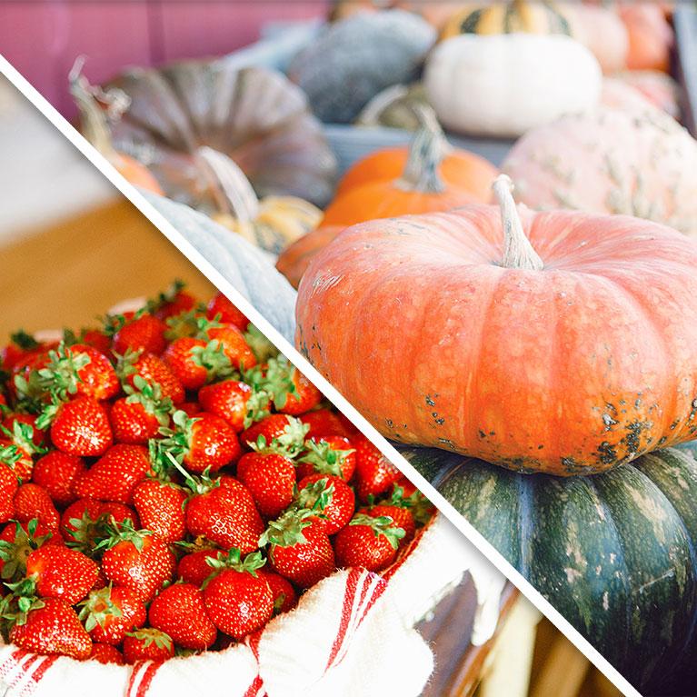 Join our Farm CSA for farm fresh strawberries and pumpkins!