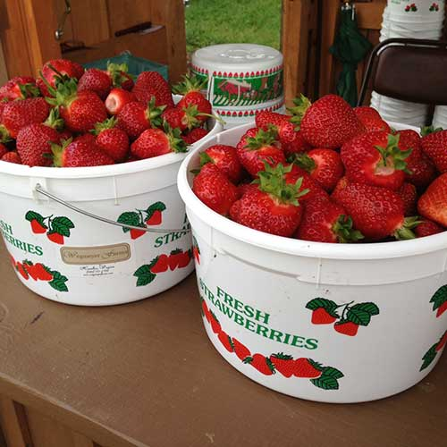Farm fresh strawberries available pre-picked and u-pick!